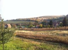 Podzim ve vinohradech