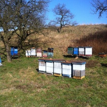 Včelí úly už hučely :-)