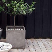 Nesmí chybět taky olivový stromek :-)