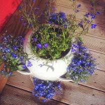 Další kytky na tereasu