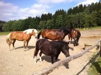 Koníci na Malevilu