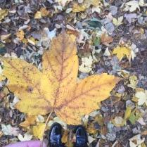 Nudherně barevný podzim